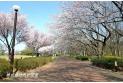 【公園】東村山中央公園 約680m