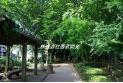 【公園】谷津の森 約550m