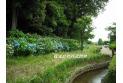 【公園】山崎公園 約350m