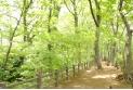 【その他】玉川上水緑道 約690m