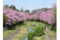 【公園】武蔵野公園 約280m