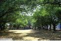 【公園】大谷場公園 約400m