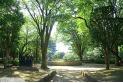 【公園】常盤公園 約10m