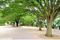 【公園】一ツ木公園 約60m