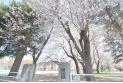 【公園】つつじヶ丘公園 約120m