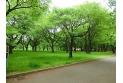 【公園】小金井公園 約850m