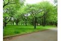 【公園】小金井公園 約830m
