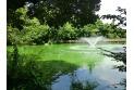 【公園】井の頭恩賜公園 約1,530m