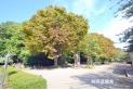 【公園】城山公園 約100m